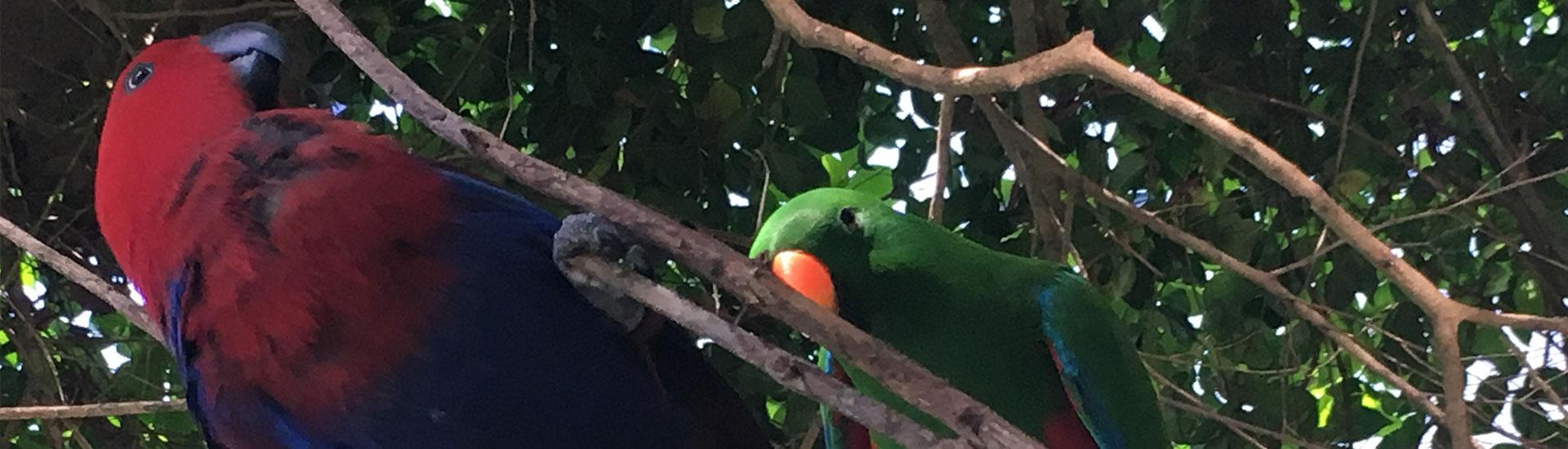 Breakfast with birds Port Douglas