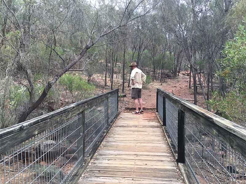 David on bridge Arkaoo Rock