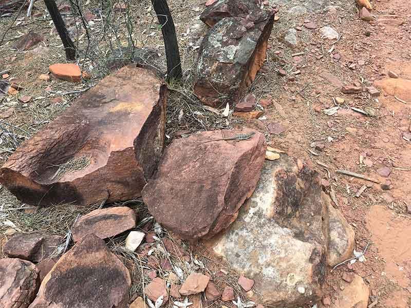 Lizard on Arkaroo Rock
