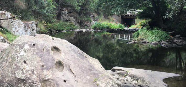 Tarra Valley