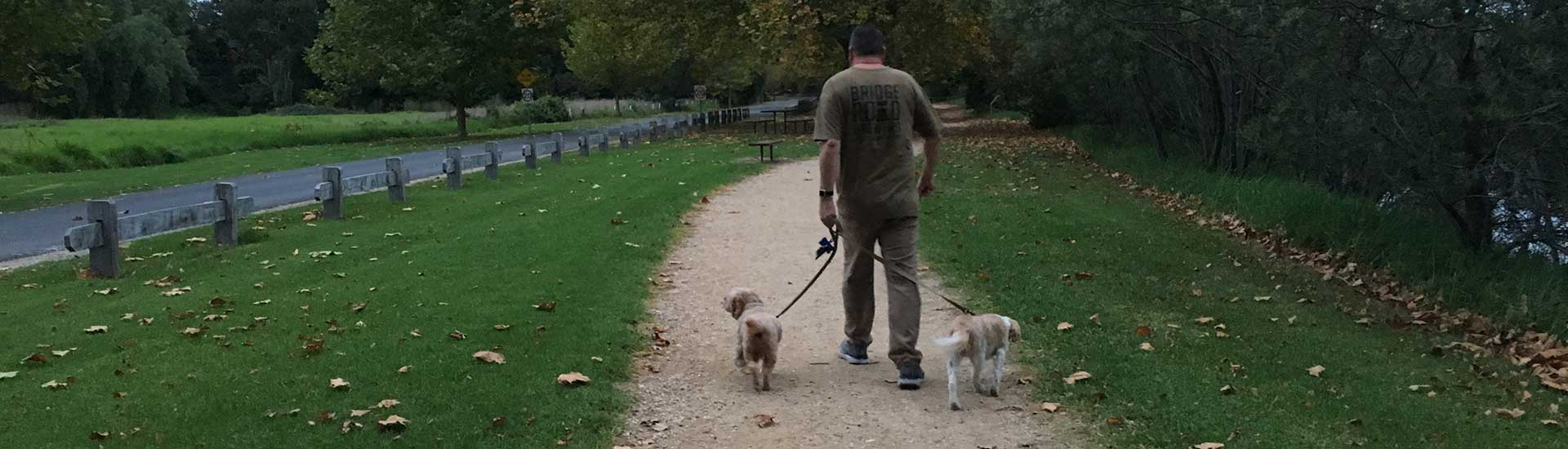 David Mitchell River walk with the dogs